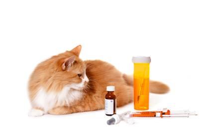 חתול סכרת