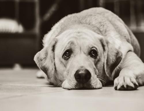 הכלב מזדקן ? זיקנה איננה מחלה