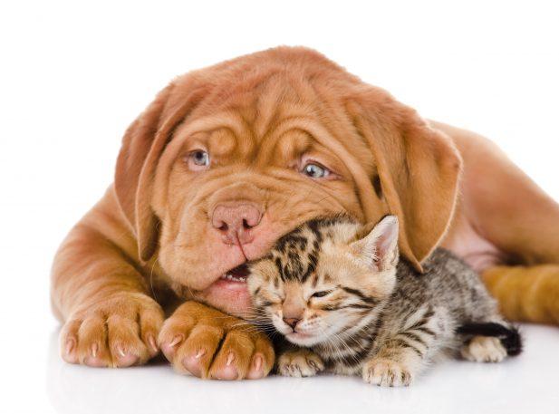 נשיכות כלבים וחתולים מרכז וטרינרי גן יבנה