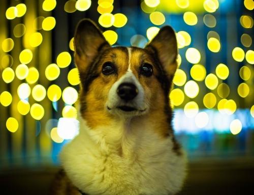 פחד מרעשים וחרדה בכלבים