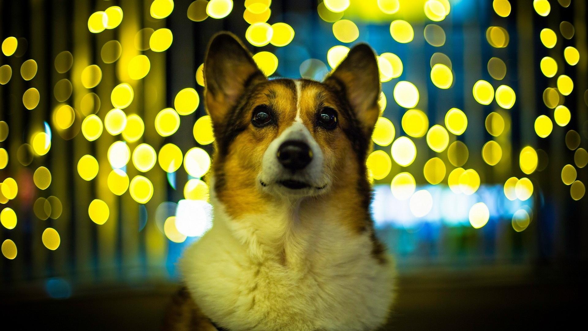 פחד מרעשים ונפצים אצל כלבים