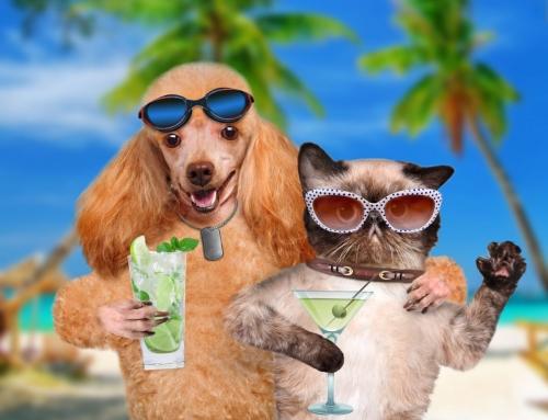 הימנעות מפגיעות חום- כיצד לשמור על בריאות חיות המחמד בקיץ?